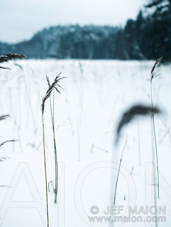 High grass and snow