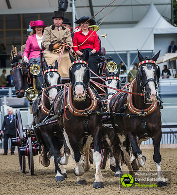 Royal_Windsor_Horse_Show_2017_021