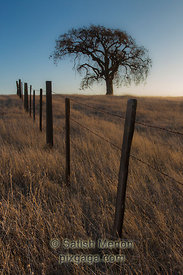 Lone tree and barbed-wire fence