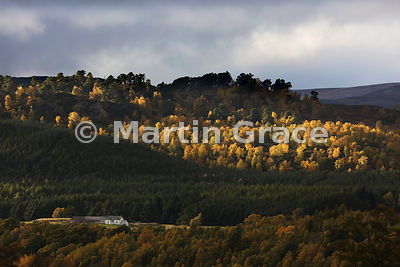 Location, location, location! Traditional Highland dwelling nestling beneath trees in late afternoon sunlight, Badenoch, Scot...
