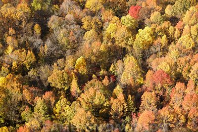 Aerial photograph of trees in fall foilage along the Mississippi River in Tennessee