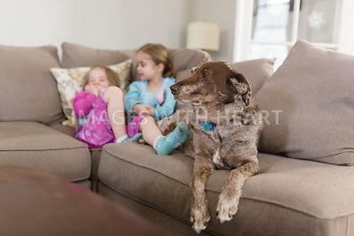 Dog_looking_sideways_on_couch_with_kids