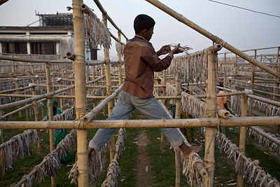 Bangladesh - Chittagong - A boy hangs fish to dry on racks on the shores of the Karnaphuli River