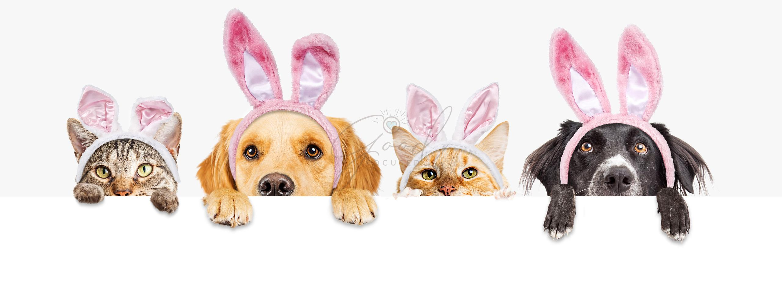 Easter Dogs and Cats Over Web Banner