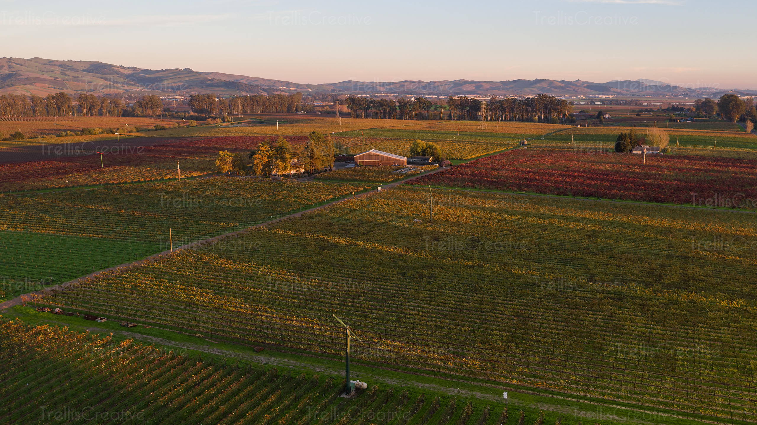 Beautiful aerial views of vines changeing color in the fall