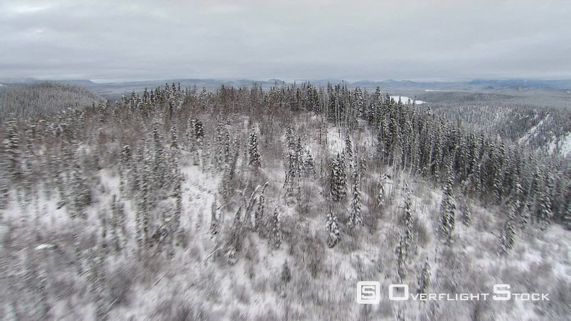 Flying above snowy forest in Alaska
