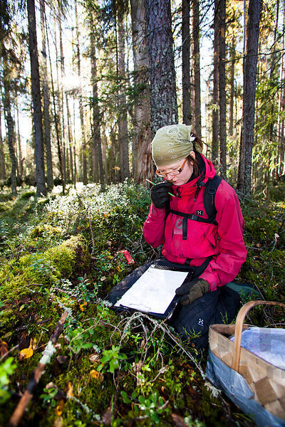 Inventory of bracket fungi species in old forest