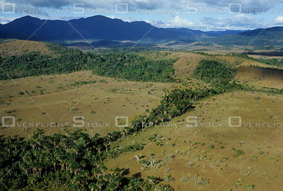 Savanna with forest gallery in Venezuela.