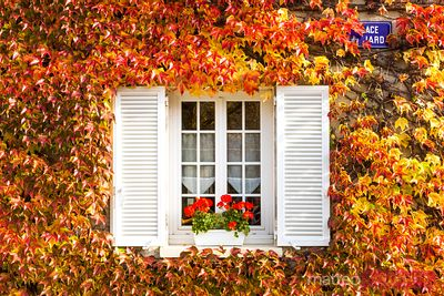 Typical window surrounded by vine in autumn, Champagne, France