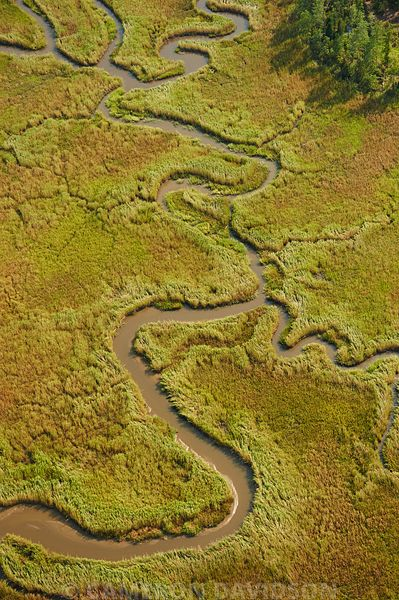 Aerial photograph of a Mattaponi River Marsh