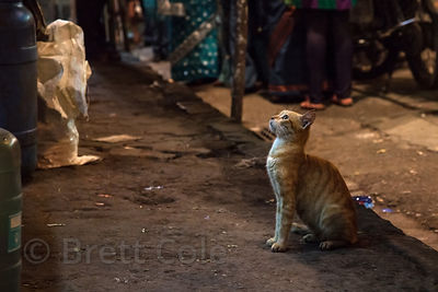 A cat waits patiently for a handout at a fish shop in Shekwalhi, Mumbai, India.