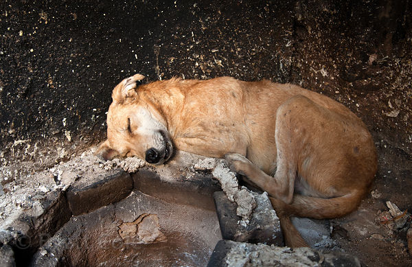 Dog sleeping next to an oven in Pushkar, Rajasthan, India