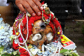 Skull with necklaces and bullet hole in the forehead, Ñatitas festival, La Paz, Bolivia