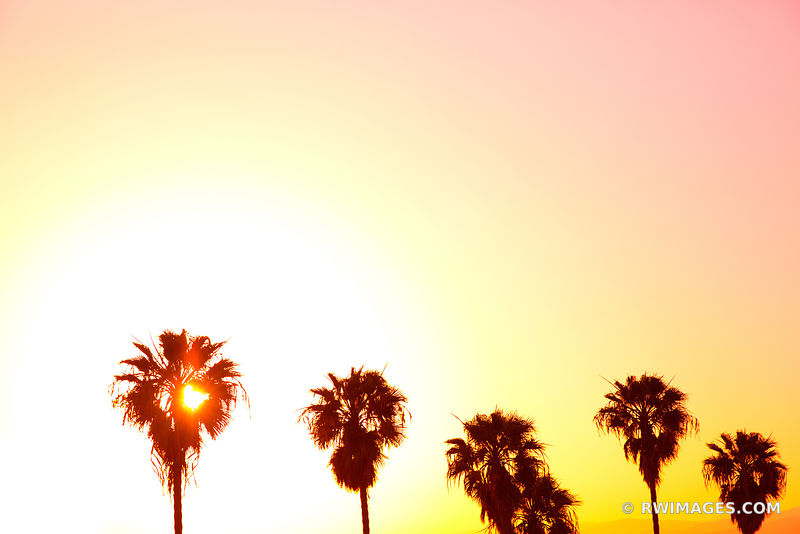 PALM TREES AT SUNSET LOS ANGELES CALIFORNIA COLOR