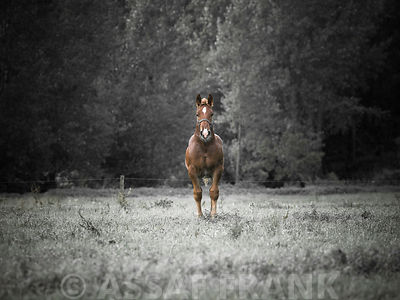 Horse standing in field
