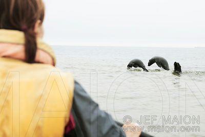 Seals jumping in front of kayak