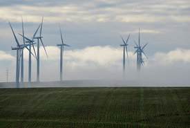 Green winter wheat with wind towers and fog