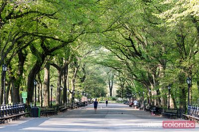 The Mall in spring, Central Park, New York, USA