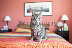 old senior cat sitting on bed with pink walls