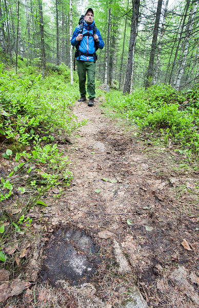Hiker & Bear Track on Forest Trail