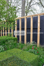 Topiaire devant claustra en bois : fabrication (Jigsaw Precision Joinery Ltd, Tom Sim), Buxus sempervirens (buis), Paysagiste...