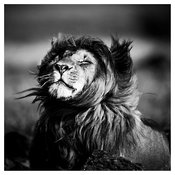 8733-Feel free in the wild, Kenya 2014 © Laurent Baheux