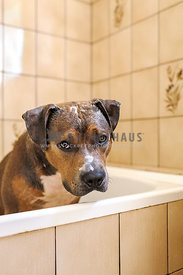 Sad dog sitting in a bath