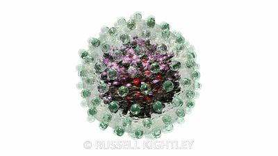 Hepatitis B Virus Structure