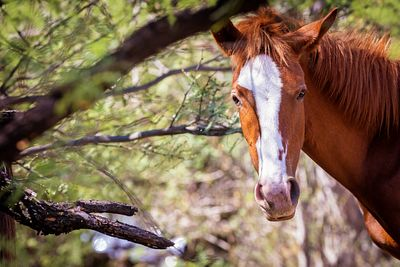 Closeup of Beautiful Wild Horse With Copy Space