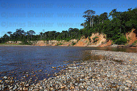 Rainforest on shore of River Tuichi , Madidi National Park , Bolivia