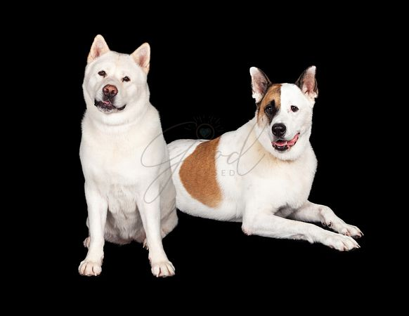 Dogs Relaxing Over Black Background