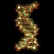 Anaglyph of a DNA molecule