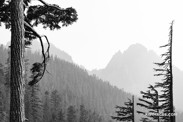 MOUNT RAINIER NATIONAL PARK WASHINGTON BLACK AND WHITE