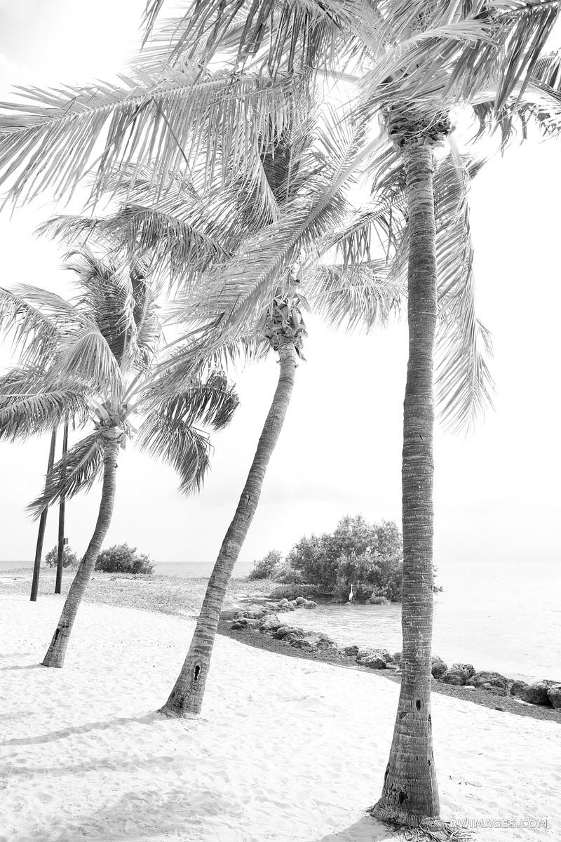 PALM TREES SOMBRERO BEACH MARATHON FLORIDA KEYS BLACK AND WHITE VERTICAL