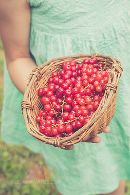 Little girl holding basket of red currants, partial view