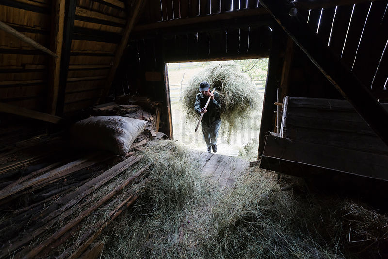 Farm Worker Loading Hay by Hand into a Barn