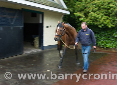 CoolmoreStud-11