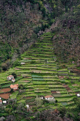 Strip cultivation in Madeira, March 2009