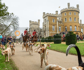 South Shropshire hounds leaving the meet - The South Shropshire and Belvoir Hunts at Belvoir Castle 11/3/17