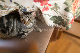 Cheeky Tabby Cat Looking Up