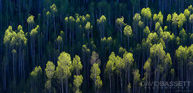 Treetop Green | San Juan Mountains, CO