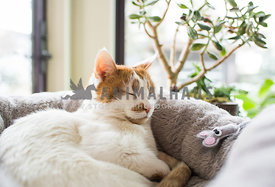 cat sleeping with a toy mouse