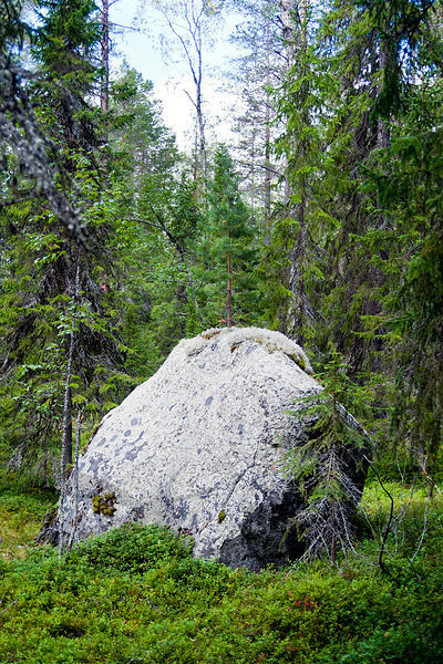 Glacial Erratic with Small Pine Growing on the Top