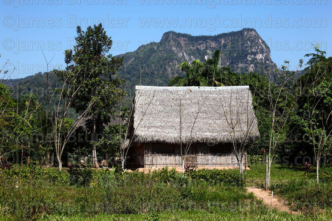 Typical bamboo and palm thatch house in countryside near Rurrenabaque , Beni , Bolivia