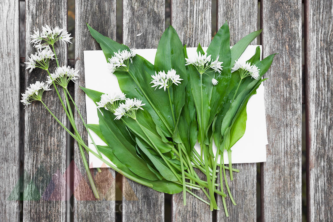 Blossoms and leaves of wild garlic