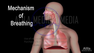 Mechanism of breathing NARRATED animation