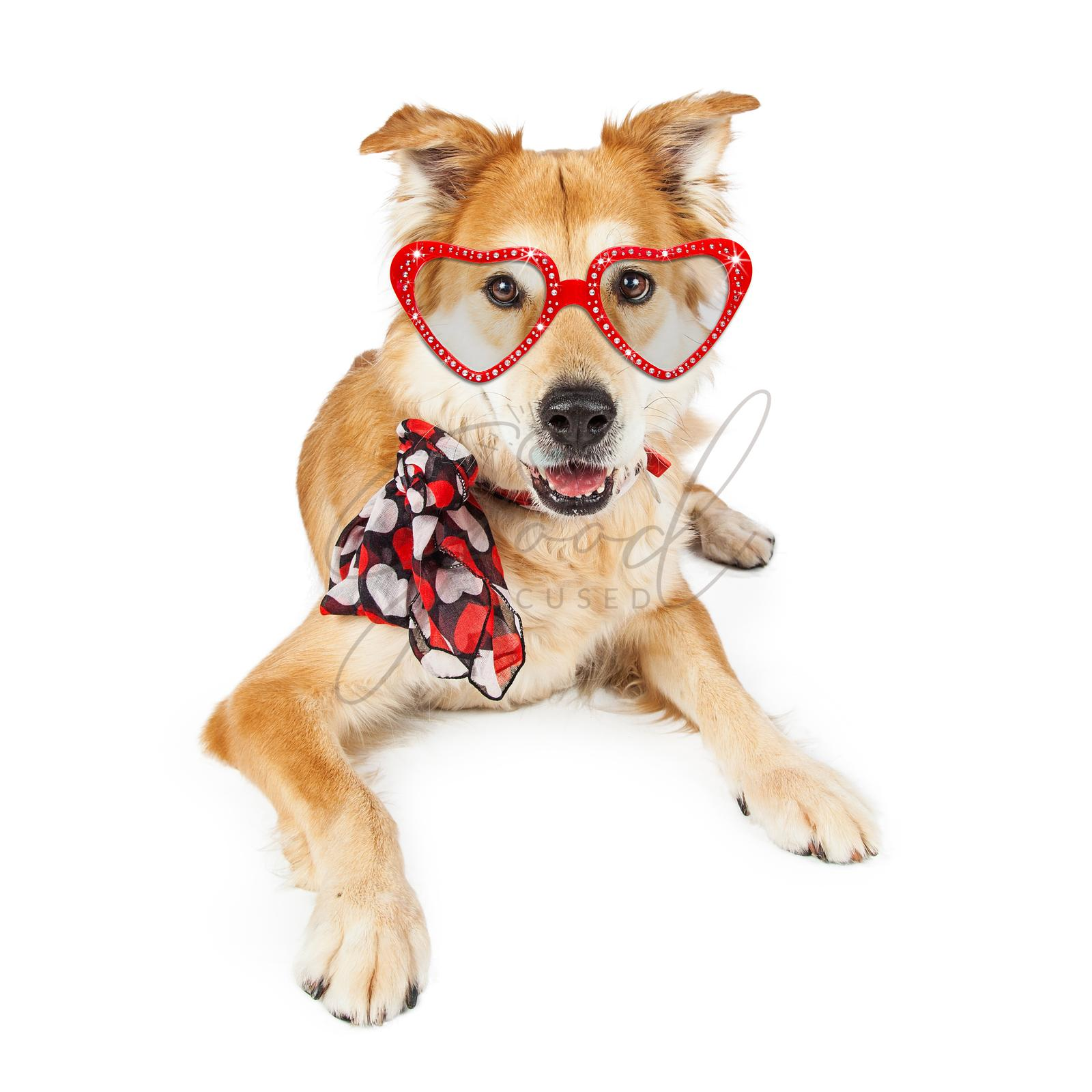 Funny Valentine's Day Dog Scarf and Sunglasses