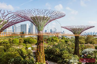 OCBC skyway and supertree grove at Gardens by the Bay, Singapore