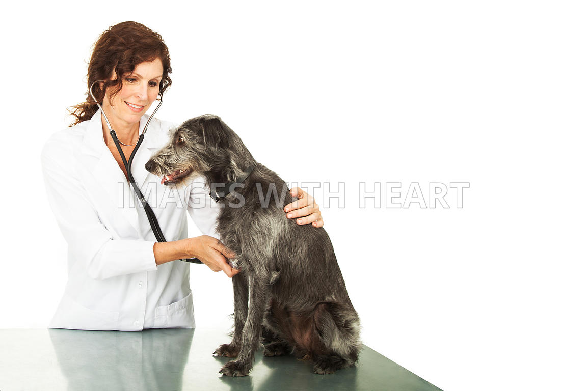 Veterinarian Checkup With Copy Space