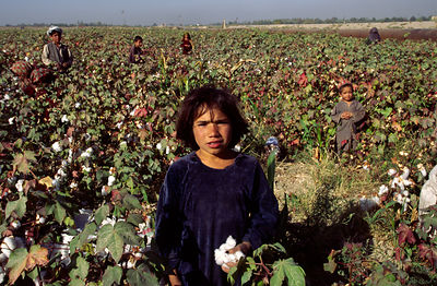 A child in a cotton field